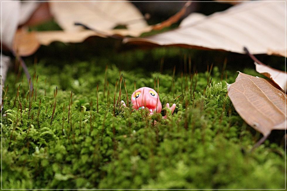 森の妖精!?_c0188951_21593728.jpg
