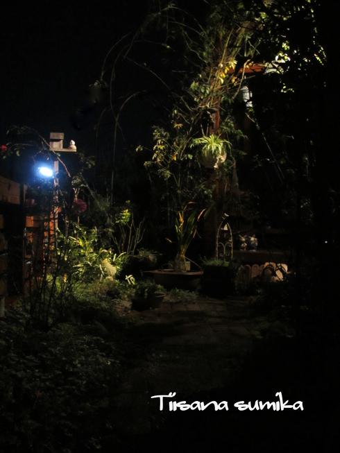 ほんのり照らされた庭_a0243064_23424093.jpg