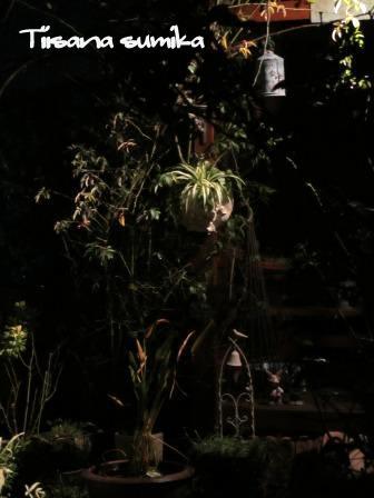 ほんのり照らされた庭_a0243064_23465842.jpg