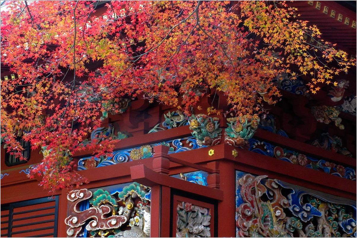 高尾山の紅葉_a0261169_1715326.jpg