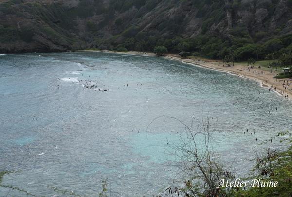 Hawaii☆ 〜ドライブ&B級グルメ・ガーリックシュリンプ〜_e0154202_19363856.jpg