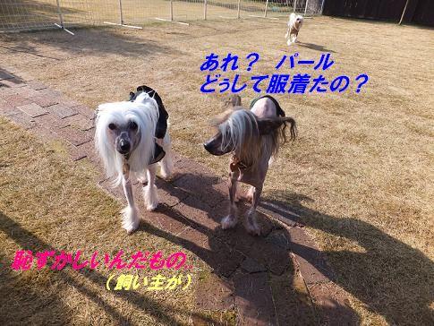 f0179203_12481599.jpg