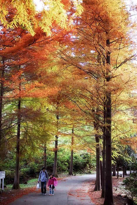 秋を集めて_d0127209_21563035.jpg