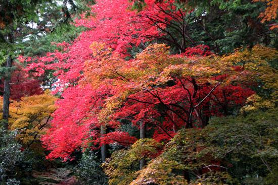 紅葉だより52 鹿王院_e0048413_22444120.jpg