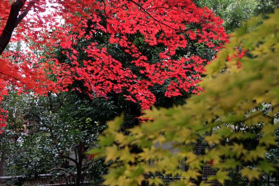 紅葉だより52 鹿王院_e0048413_22494754.jpg