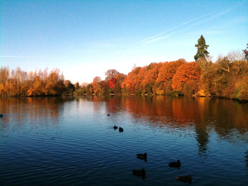 私の好きな秋冬ホットドリンク_d0104926_47011.jpg