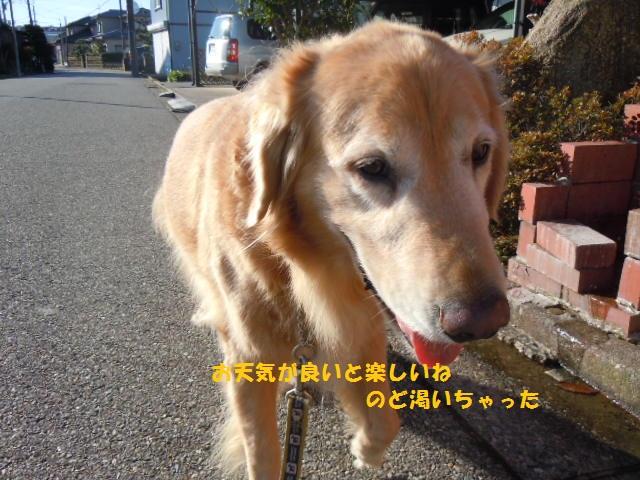 f0114128_1743368.jpg