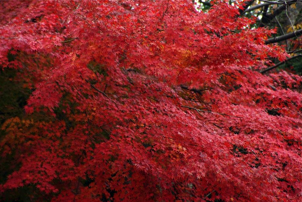 遠野の紅葉は見損なったけど・・・・_d0001843_1950912.jpg