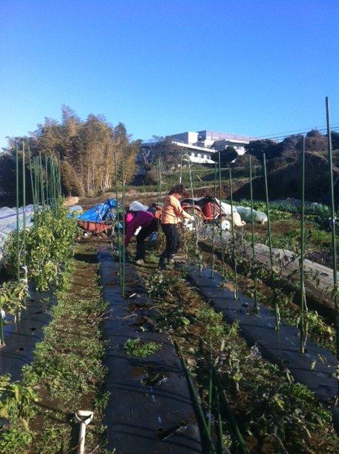 玉葱の定植する畝を作ります_c0222448_15353142.jpg