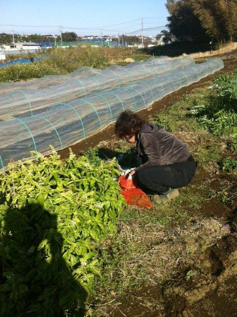 玉葱の定植する畝を作ります_c0222448_1610198.jpg
