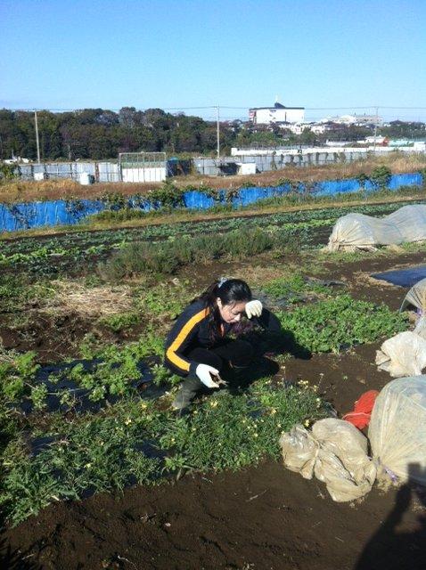 玉葱の定植する畝を作ります_c0222448_1694850.jpg