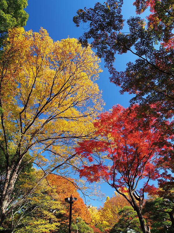 日比谷公園_a0100959_2154246.jpg