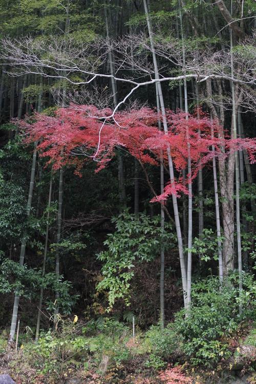 紅葉を探しに・・・_a0193460_22563096.jpg