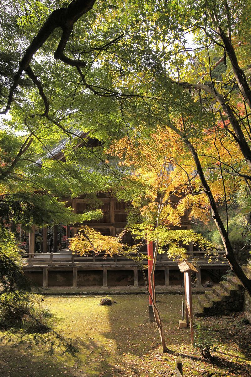 紅葉 2012  西山  金蔵寺_f0021869_010077.jpg