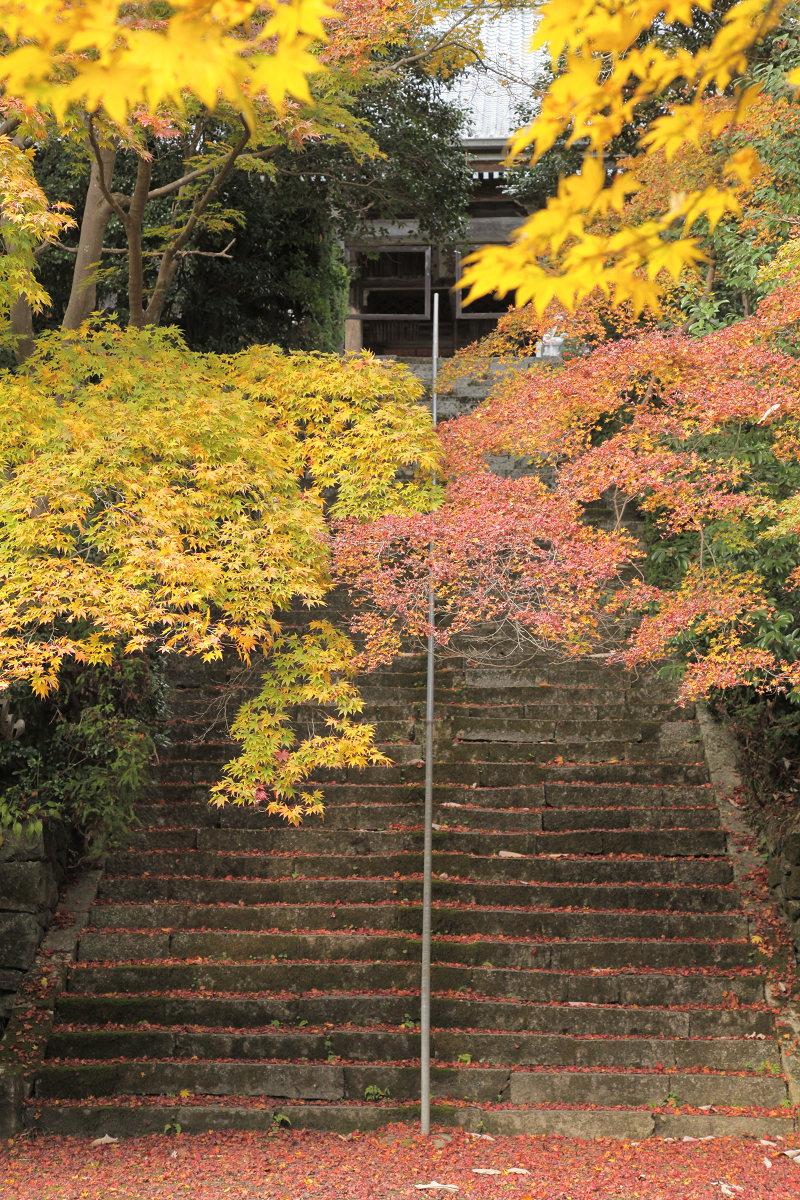 紅葉 2012  西山  金蔵寺_f0021869_0152027.jpg