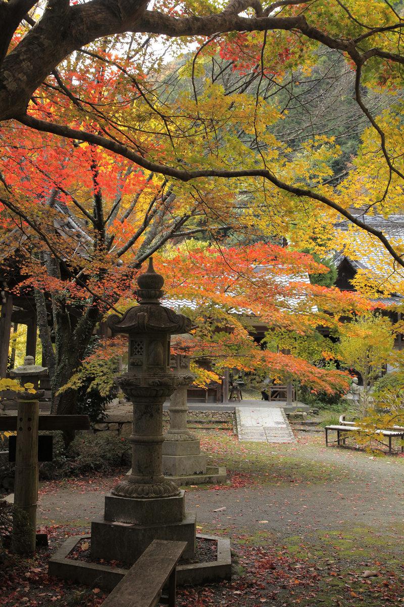 紅葉 2012  西山  金蔵寺_f0021869_0163064.jpg