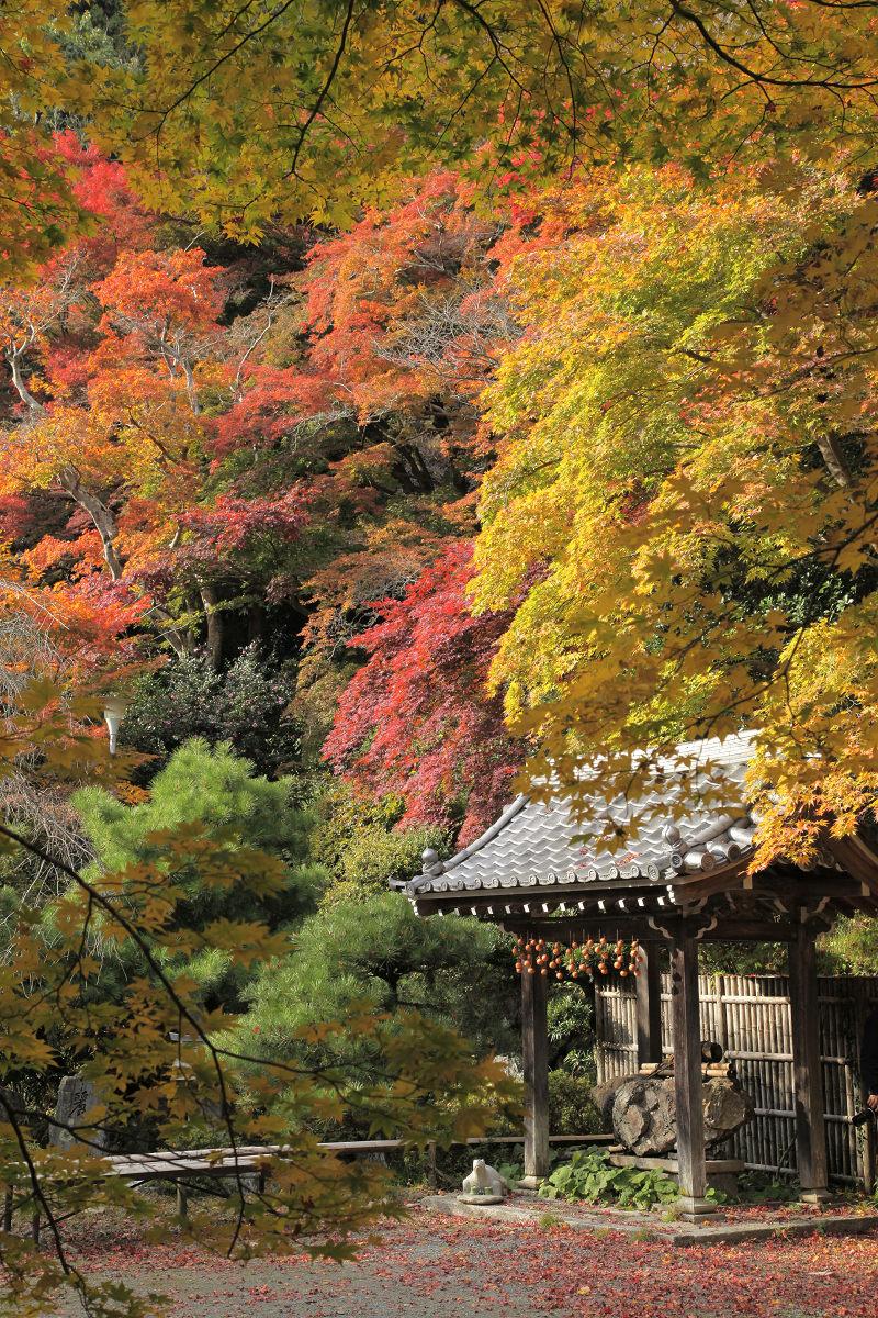 紅葉 2012  西山  金蔵寺_f0021869_0163964.jpg