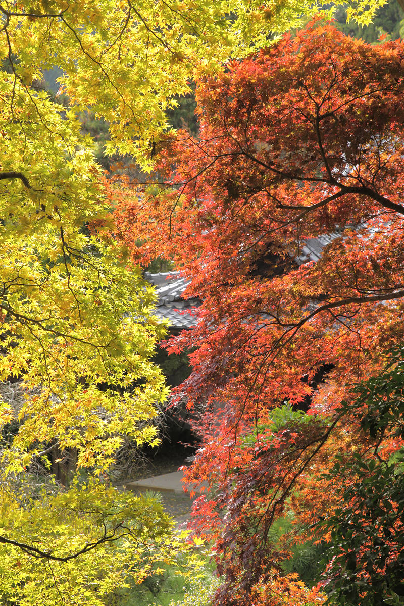 紅葉 2012  西山  金蔵寺_f0021869_0172711.jpg