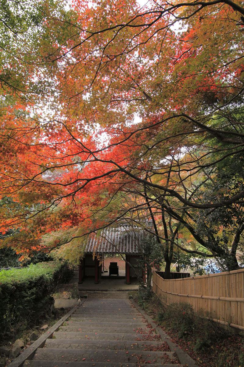 紅葉 2012  西山  金蔵寺_f0021869_0194583.jpg