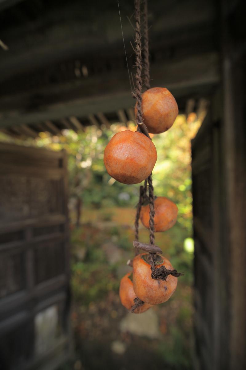 紅葉 2012  西山  金蔵寺_f0021869_072648.jpg