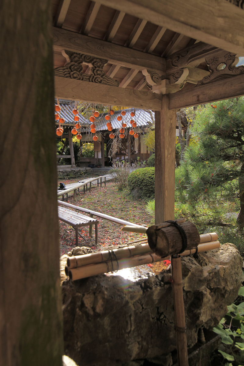 紅葉 2012  西山  金蔵寺_f0021869_081067.jpg