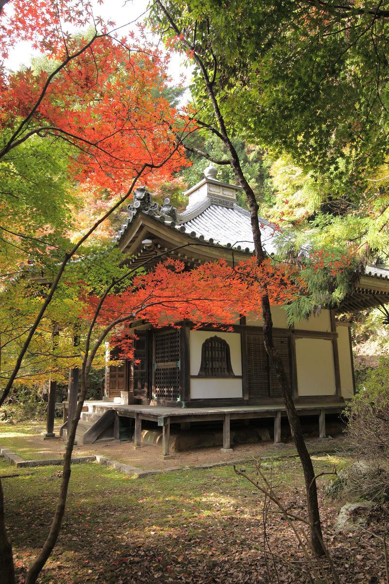 紅葉 2012  西山  金蔵寺_f0021869_085923.jpg
