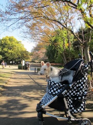 約3か月ぶりに公園へ_c0070377_1771748.jpg