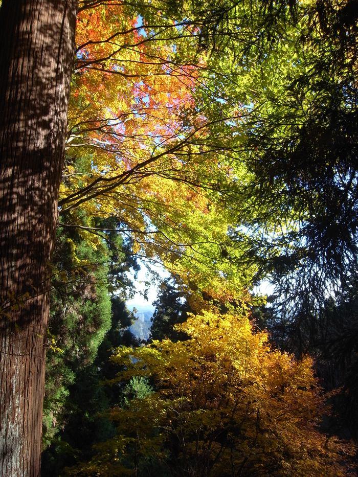 2012.11.25 奥多摩EastをHike&Jog_b0219778_19384448.jpg