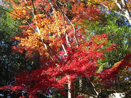 紅葉の高尾山_a0180279_1840658.jpg