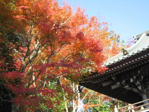 紅葉の高尾山_a0180279_1845323.jpg