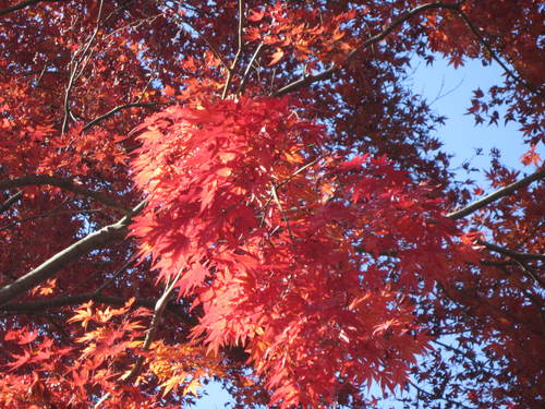 紅葉の高尾山_a0180279_19135775.jpg