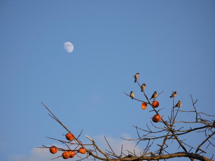 スズメの柿の木_d0047885_2143291.jpg