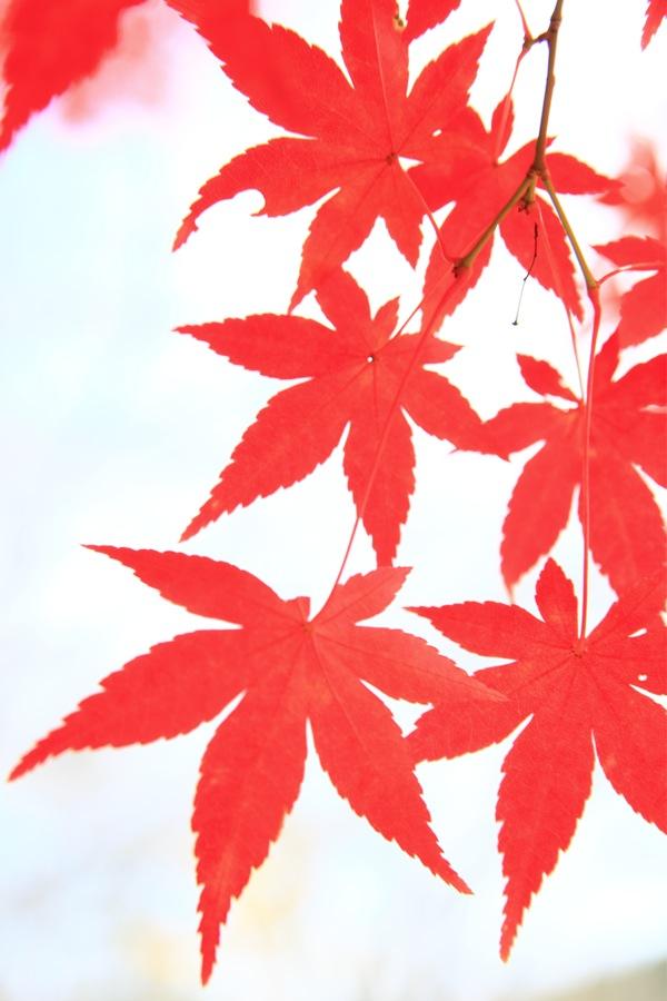 紅葉シーズン終わる_a0157091_18335997.jpg