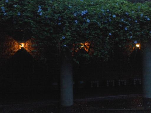 夢のような庭園_a0247891_2514868.jpg