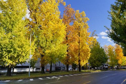今日も、京都へ~、絵画のような、美しい、秋景色!を~。_d0060693_2017691.jpg