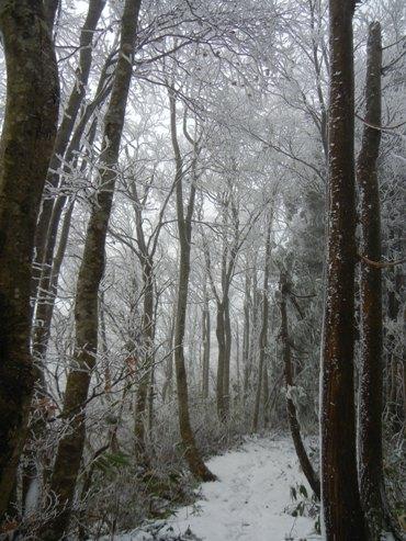 扇ノ山 は雪だった_a0236300_10392014.jpg