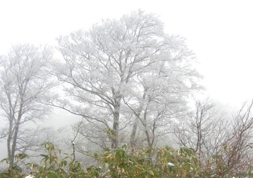 扇ノ山 は雪だった_a0236300_1041368.jpg