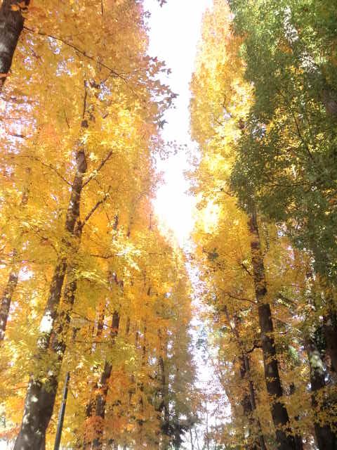 岡山県総合グラウンド_f0197703_12255999.jpg