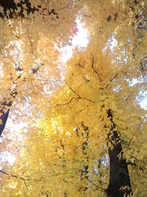 岡山県総合グラウンド_f0197703_12261338.jpg