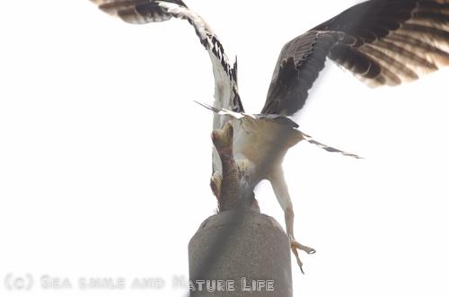 野鳥探索~♪_a0155606_21182646.jpg