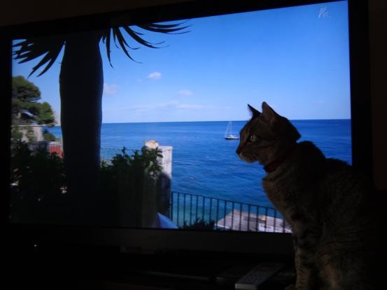 猫だらけにゃ~_f0064906_17333043.jpg