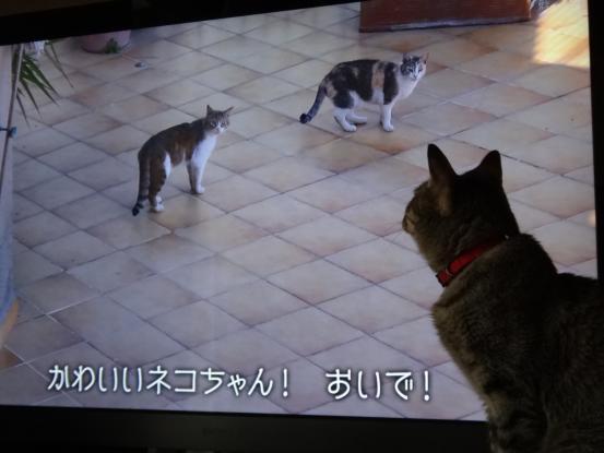 猫だらけにゃ~_f0064906_17351260.jpg