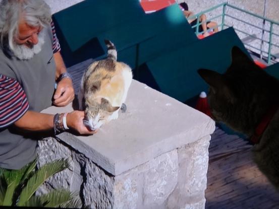 猫だらけにゃ~_f0064906_17365438.jpg
