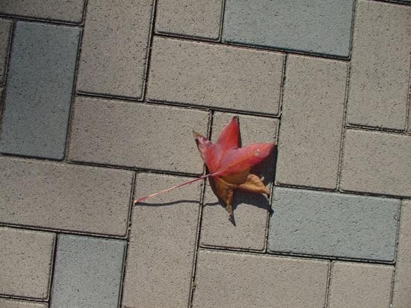 小さい秋み~つけた☆_e0235911_11431777.jpg