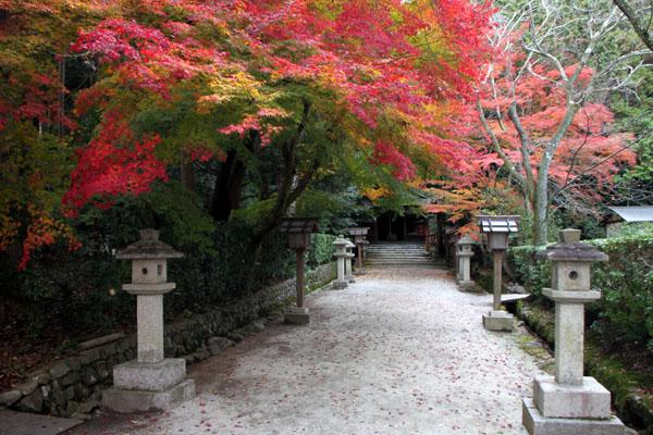 紅葉だより53 太田神社とあぜくら_e0048413_14445945.jpg