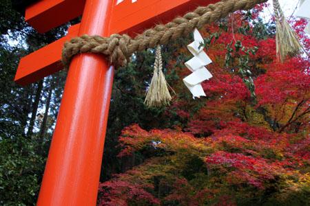 紅葉だより53 太田神社とあぜくら_e0048413_14451046.jpg