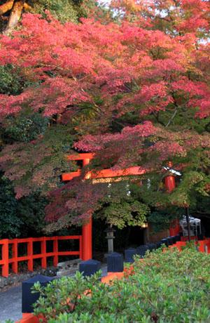 紅葉だより53 太田神社とあぜくら_e0048413_14452077.jpg