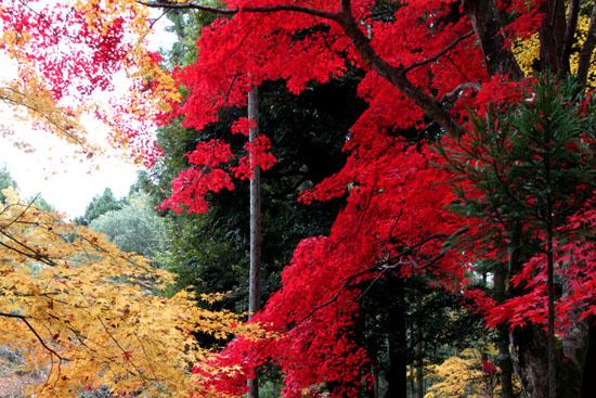 紅葉だより55 護法堂弁財天_e0048413_1722213.jpg
