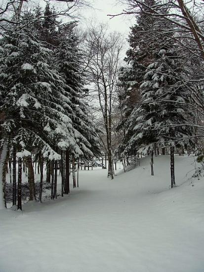 2012年11月26日(月):雪→雨[中標津町郷土館]_e0062415_1951575.jpg