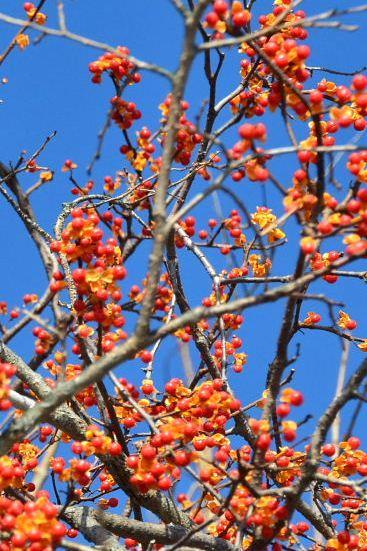 2012年11月26日(月):雪→雨[中標津町郷土館]_e0062415_19542110.jpg